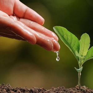 SDGs「陸の豊かさも守ろう」を達成するために私たちにできることとは