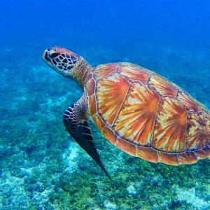 SDGsの目標14「海の豊かさを守ろう」で解決するべき問題と現状とは