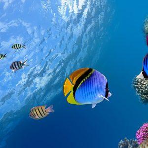 海洋生物多様性の重要性を知り、SDGs達成に向けて取り組むべき対策を考えよう