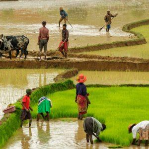 SDGs目標2の飢餓の解決に「持続可能な農業の実現」が重要な理由とは?