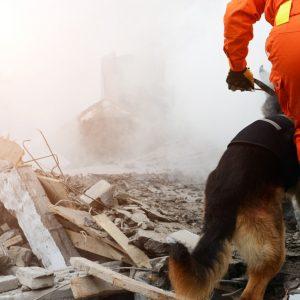 災害地や被災者に寄付しよう!ふるさと納税や遺贈寄付の方法、義援金の受付窓口・団体の探し方などを解説