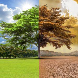 地球温暖化のメカニズムや原因、現状は?私たちへの影響やすぐにできる対策も解説