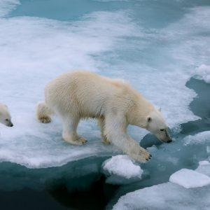 地球温暖化によってどんな影響が生じる?私たちができる対策とは