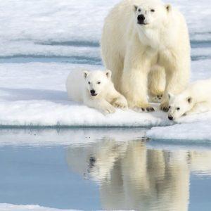 地球温暖化による動物たちへの影響は?