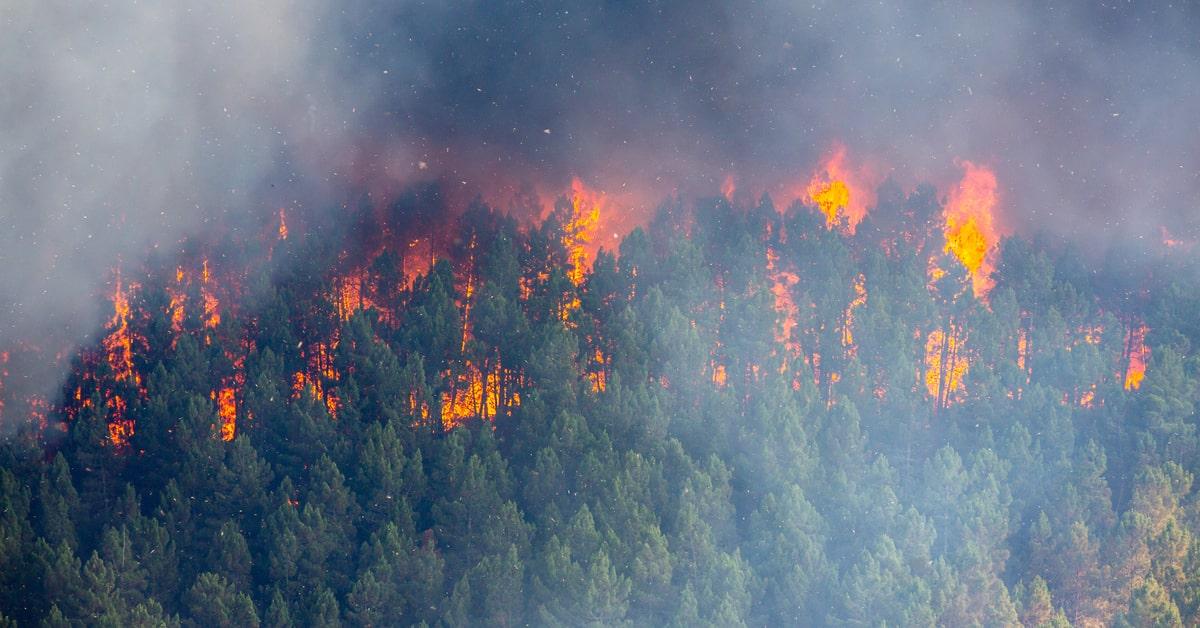 森林火災とは?地球温暖化との関係や発生の原因について解説