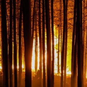 近年世界で発生している大規模な森林火災やその原因を知ろう