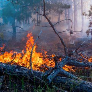 森林火災は自然にどのような影響を与える?