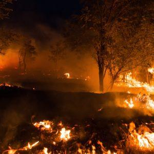 日本でも森林火災に注意!発生頻度や考えられる二次災害とは