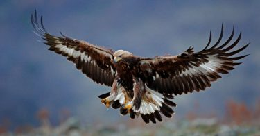 絶滅危惧種に指定される鳥は?世界規模で見てみよう