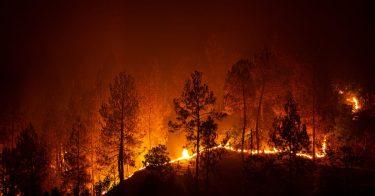 森林火災の4つの種類について解説