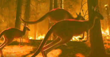 オーストラリアの森林火災は他人事ではない!日本への影響とは