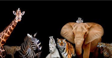 陸で絶滅危惧種が増える原因とは?対策についても考えよう