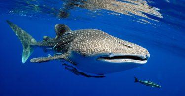 海の絶滅危惧種一覧の一部を公開!レッドリストとは