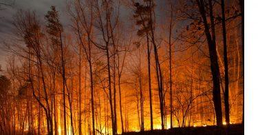 森林火災の原因とは?なぜ起こるの?