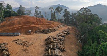 森林破壊を防ぐために環境省が行っている取り組みとは?