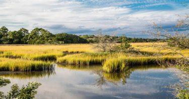 SDGsが掲げる「陸の豊かさも守ろう」のため、湿地の生態系や保全活動について理解しよう
