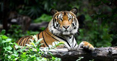 SDGsが掲げる「陸の豊かさも守ろう」のため、動植物種の密猟について理解しよう