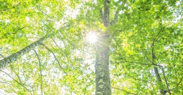 SDGsが掲げる「陸の豊かさも守ろう」のため、山地の生態系や保全活動について理解しよう