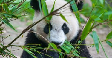 SDGsが掲げる「陸の豊かさも守ろう」のため、絶滅危惧種について理解しよう