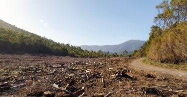 森林破壊とは?具体的にどんな問題が起こっているの?