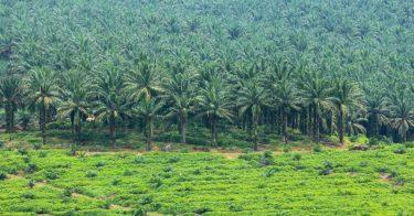 森林破壊はパーム油の生産がもたらす?