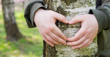 森林破壊が引き起こす私たちへの影響とは?