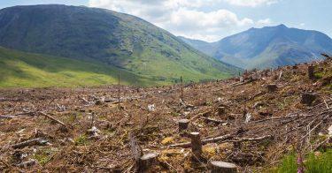 森林破壊によって動物など生態系はどんな危機に面しているの?