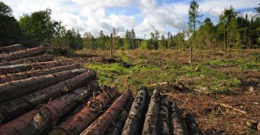 森林破壊を防ぐために私たちができることとは?