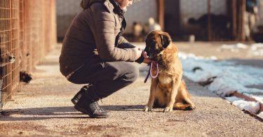 動物愛護団体とは?活動内容や寄付の方法を紹介