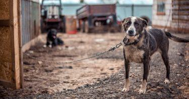 動物虐待を見つけたときの通報先や手段とは