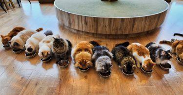 動物愛護団体における猫の引き取りについて費用や方法を解説