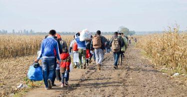 シリア難民が行う難民認定申請とは?難民申請が認められるとどうなる?