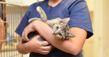 動物愛護センターから猫を引き取りたい。申し込み条件とは