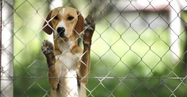 動物虐待に関する法律にはどんなものがある?