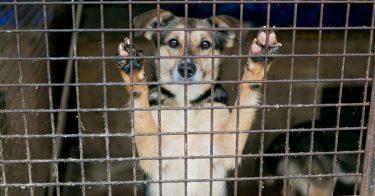 動物愛護センターの殺処分ゼロに向けた取り組みとは?