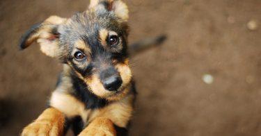 動物愛護センターで犬の里親になるには?