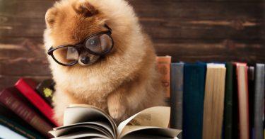動物愛護管理法の改正で何が変わった?