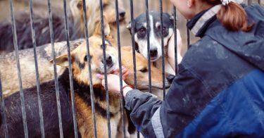 動物愛護のボランティアがしたい!活動内容や参加方法とは
