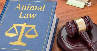 動物愛護管理法とは?内容や罰則などを解説