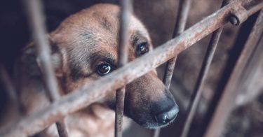 動物虐待の罪とは?罰則についても解説