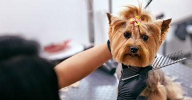 動物取扱業者になるための申請方法は?