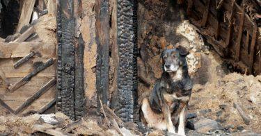 過去の災害におけるペットの救助活動や今後の課題について紹介