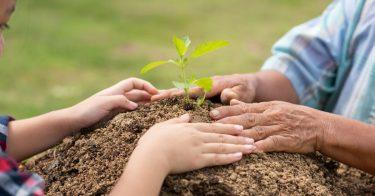 地球温暖化を防止するためのボランティア活動とは?参加方法など紹介