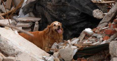 ペットと避難するための災害対策を紹介