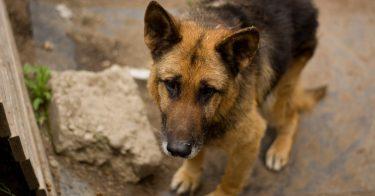 動物虐待にはどんな事例がある?過去の事件を紹介