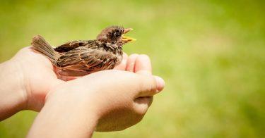 鳥獣保護管理法とは?目的や対象の鳥獣を紹介