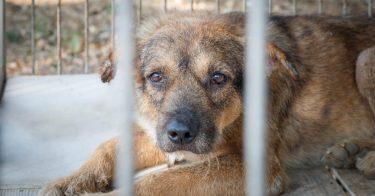 動物虐待の判例、実際に下された刑罰など紹介