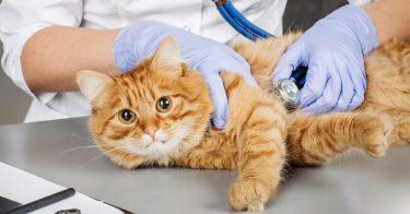 愛玩動物看護師法とは?動物愛護に関する法律を知ろう