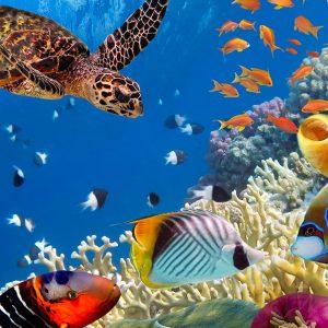 海洋生物の多様性を守るために日本が行っている取り組みは?